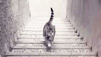 Tes Kepribadian Anda dengan Tebak Kucing Ini Sedang Turun atau Naik Tangga?